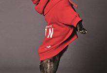 Photo of Dsquared2 X Poldo Dog コレクションが登場|株式会社スタッフインターナショナルジャパンのプレスリリース
