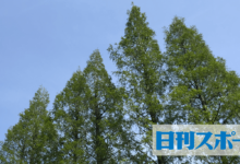 Photo of ドラクエの世界を再現 淡路島に新アトラクション – 社会写真ニュース : 日刊スポーツ