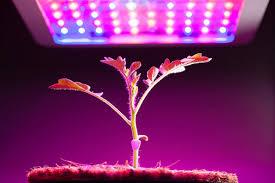 Photo of 植物農業用照明市場2020業界規模、シェア、トレンド技術、グローバルキープレーヤー| 2026年の予測 – securetpnews