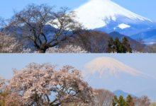 Photo of 日本の春は美しい 桜ビフォーアフター第一弾 – ウェザーニュース