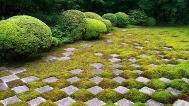 Photo of 京都(後編):伝統と革新が融合した国際観光都市 | nippon.com